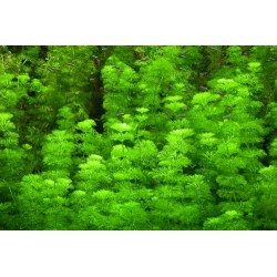 HELP Advanced Soil Shrimp - 8 litros