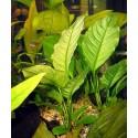 HELP Advanced Soil Shrimp - 3litros