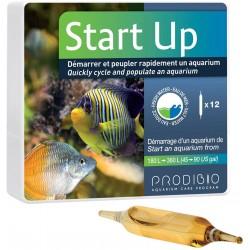 Start Up Prodibio 1 ampolla
