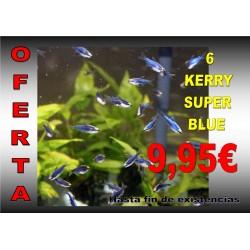 Kerry super blue 6