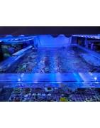 Iluminación acuario Marino
